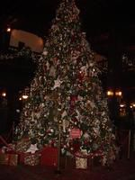 Hotel Del Coronado Huge Christmas Tree
